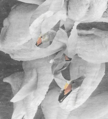 small swan4